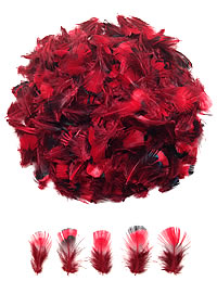 Little Red Pheasant Feathers - per ounce