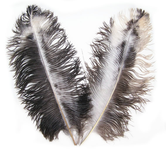 Chinchilla Ostrich Wing Feathers | Wholesale Ostrich Wing Feathers