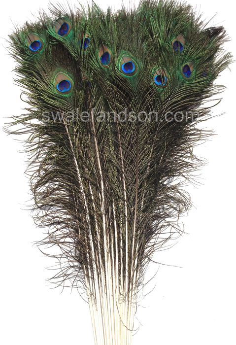 Eyed Peacock Sticks | Wholesale Peacock Feathers