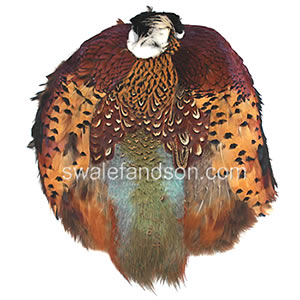 Pelts, Wings, and Plumage | Pheasant Feathers