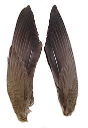 "Grey Goose Wing Pointer Sections 16-20"" - per pair"