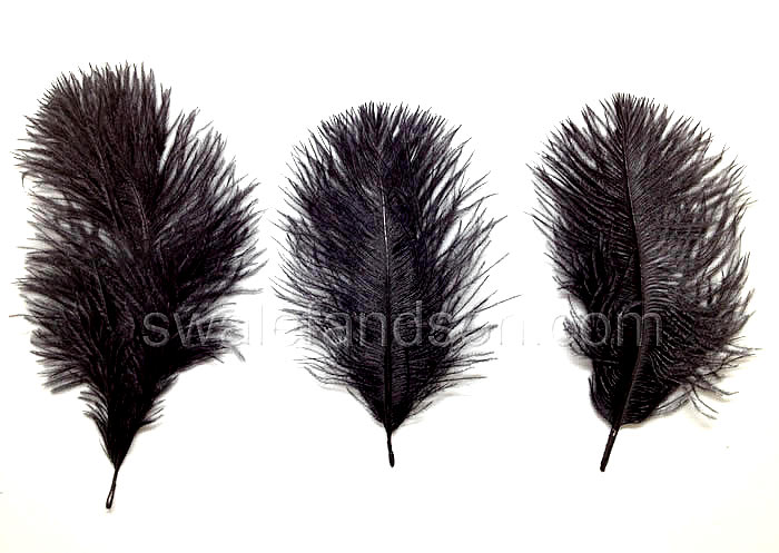 Black Ostrich Belly Feathers | Wholesale Ostrich Feathers