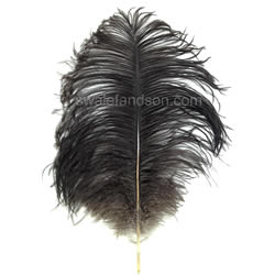 Natural Ostrich Feathers | Ostrich Feathers