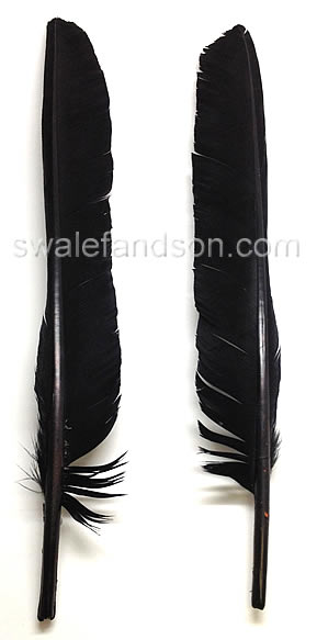 Turkey Pointers Dyed Black | Wholesale Turkey Feathers