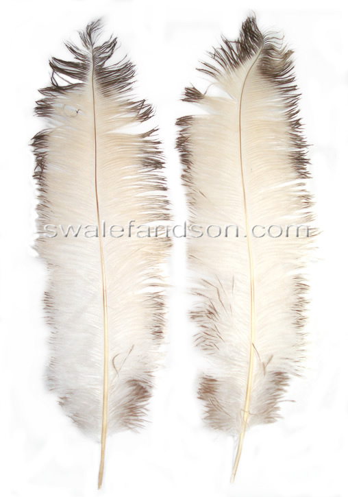 Ostrich Spads 20-26"