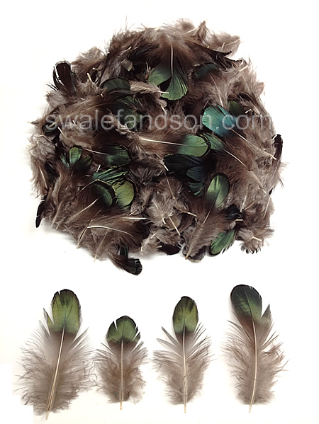 Lady Amherst Pheasant Bronze Plumage | Loose Feathers Plumage