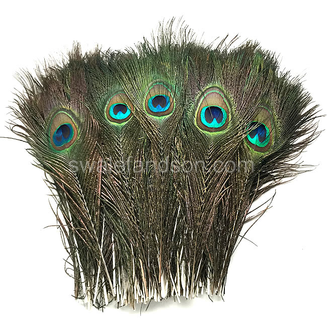 Wholesale Peacock Feathers | Cut Peacock Eyes