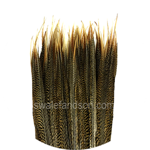 Golden Pheasant Feathers | Wholesale Feathers