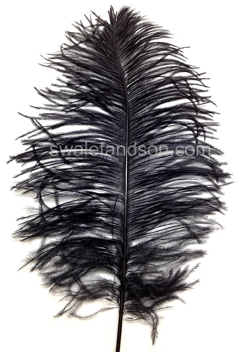 "Ostrich Tail Feathers 14-17"" Dyed Black 